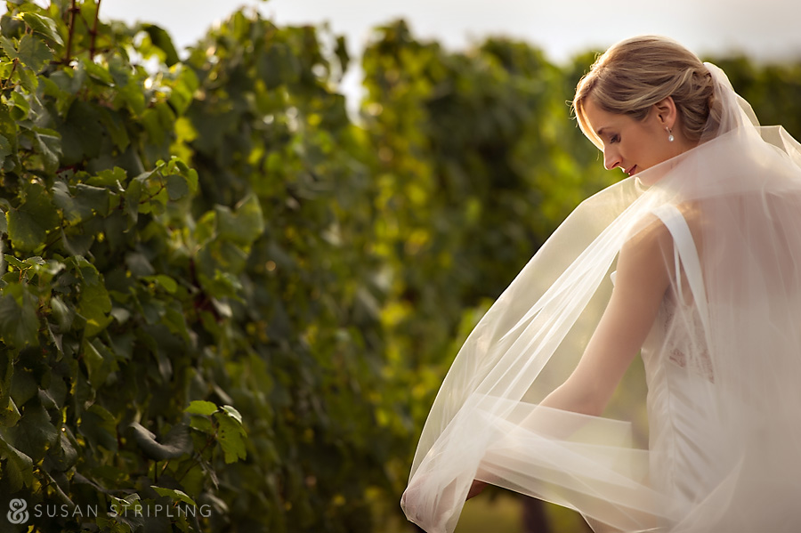 Bedell Cellars Wedding